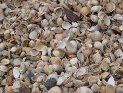 Seashells medIa